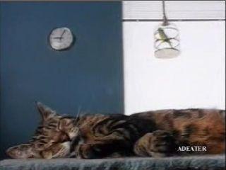 Kočka a pták