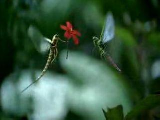 Život vážky